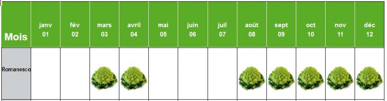 Planning de production du Choux Romanesco